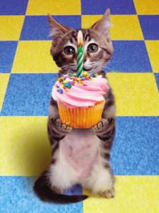 birthday_kitten