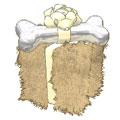 Oatmeal-Pup-Gift