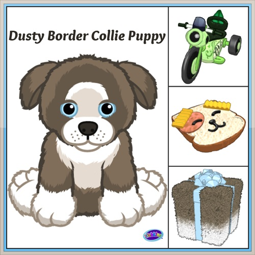 DustyBorderColliePuppy